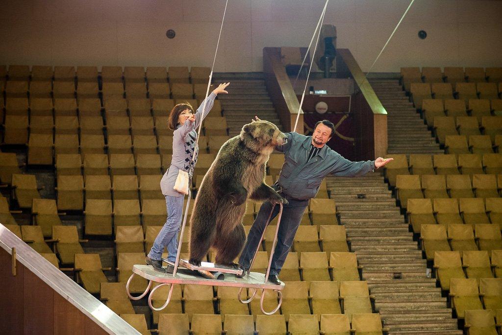 Кировчанам покажут медведя, парящего под куполом цирка