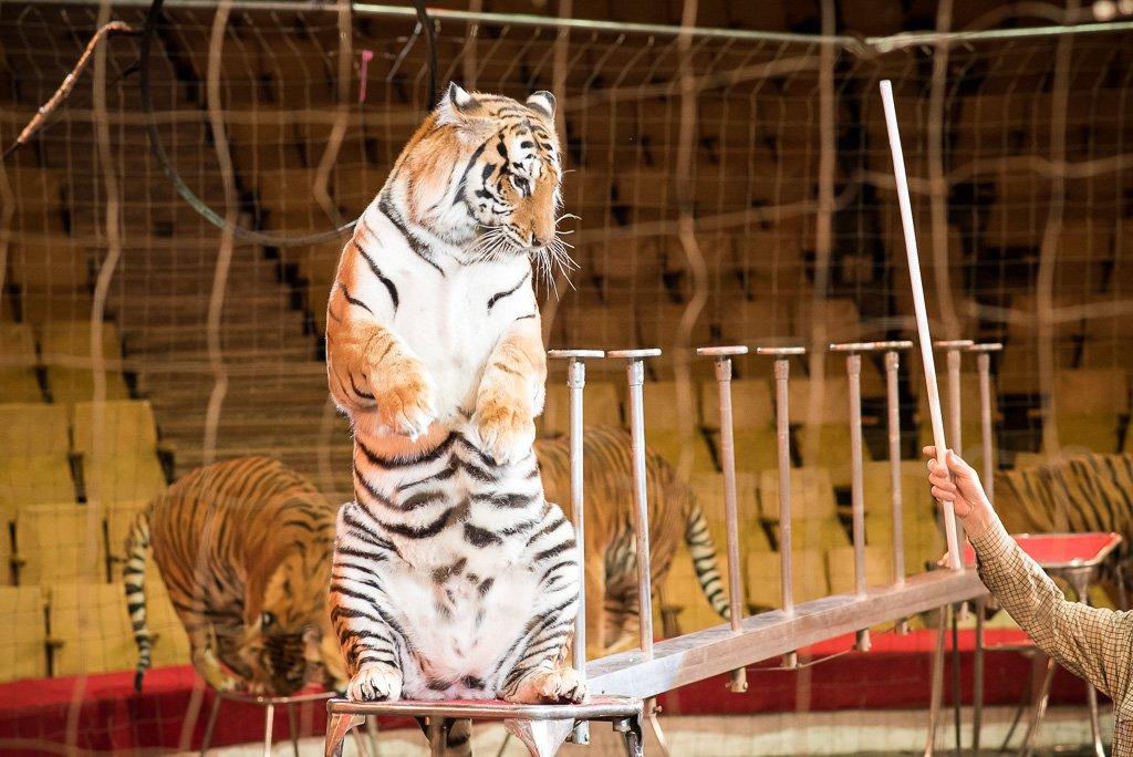 своей картинки рысь и тигры у ног моих сели всегда поздравляете вашу